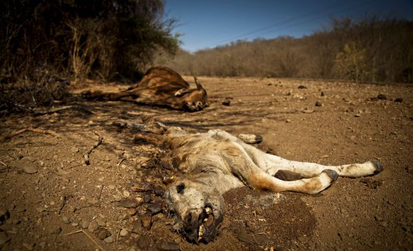 Pronostican décadas de sequía para México a finales de siglo (17:33 h)