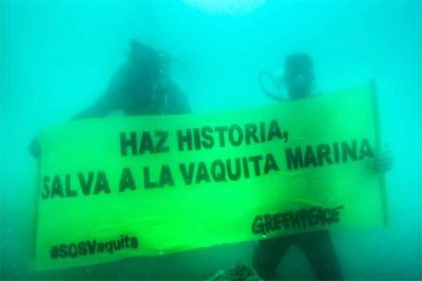 El sexenio de EPN verá el fin de la Vaquita Marina, dicen activistas (19:20 h)