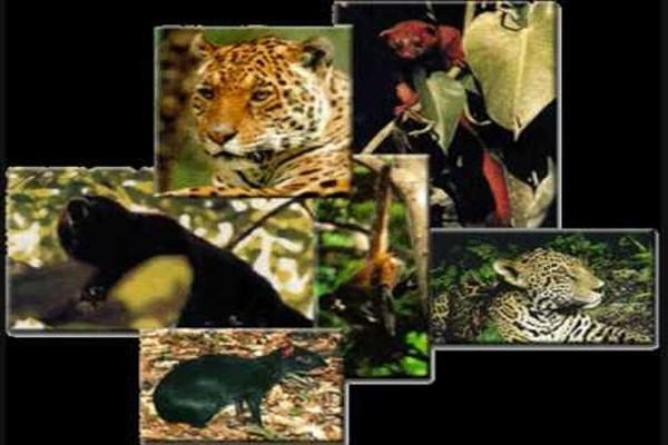 Barómetro de la Biodiversidad en México (17:00 h)