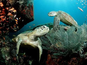 En Oaxaca inicia el nacimiento de crías de tortuga golfina (22:57 h)