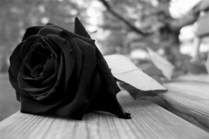 rosa luto