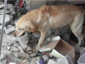 perro rescatista muere