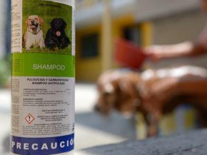 Limpieza y cuidado de animales de compañía ayudan a prevenir la Rickettsia SSO 2